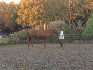 Equine asssisted learning